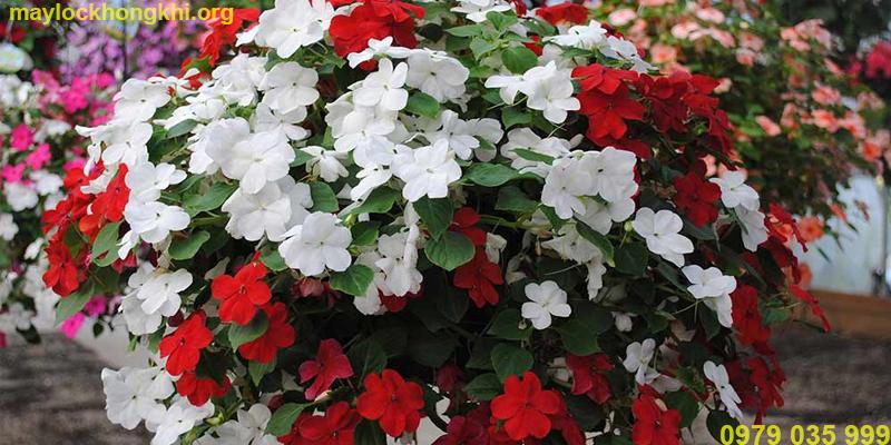 hoa lọc không khí thu hải đường trường sinh