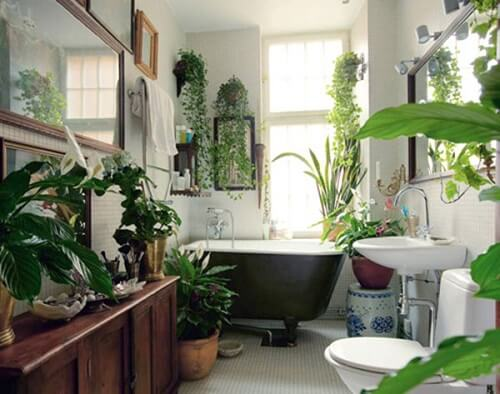 Trồng cây xanh trồng nhà giúp làm sạch không khí