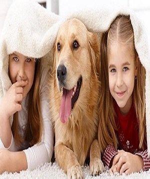 Cách khử mùi thú cưng trong nhà hiệu quả