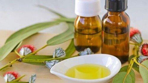 Tinh dầu khuynh diệp làm sạch không khí