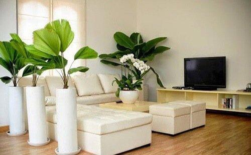 Trồng cây xanh trong nhà giúp thanh lọc không khí